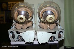 Soviet dog space suit